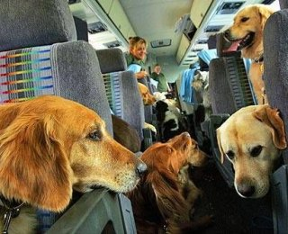 Airlines Seek to Limit Types of Therapy Animals Allowed on Planes
