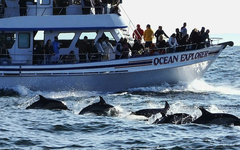 A Picture Of Whale watching In Newport Beach